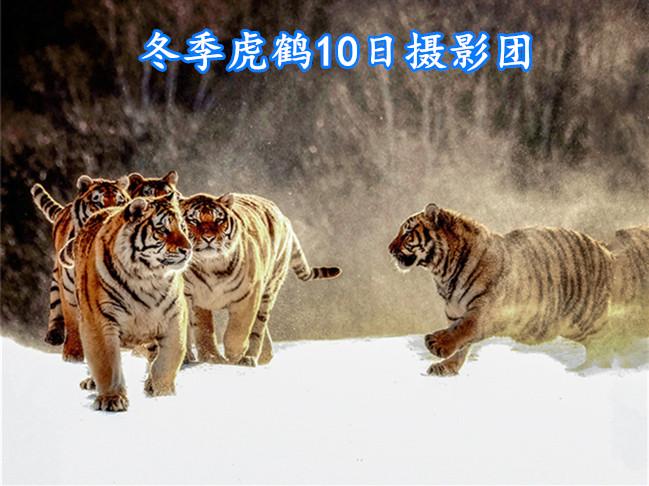 虎鹤摄影团