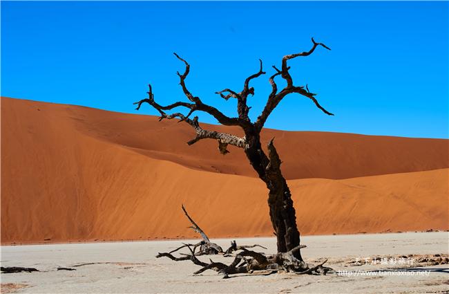 狂野非洲:纳米比亚+博茨瓦纳+赞比亚+津巴布韦四国21日摄影之旅
