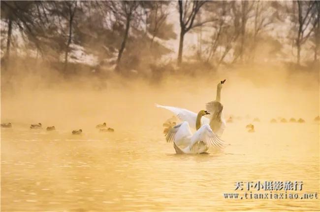 天山雾雪摄鸿鹄——伊宁天鹅泉9日摄影团