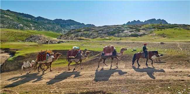 流动的画卷--牧群络绎卷黄沙 北疆哈萨克牧民春季转场摄影创作团